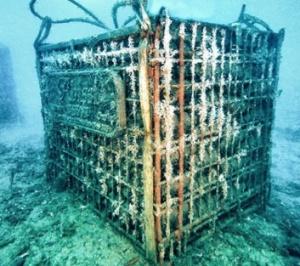 Bisson-Abissi-cage-undersea