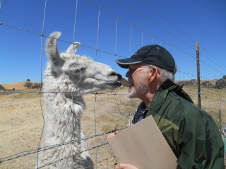 I share a snack with Floyd, head of the Wild Horse Winery clan of llamas